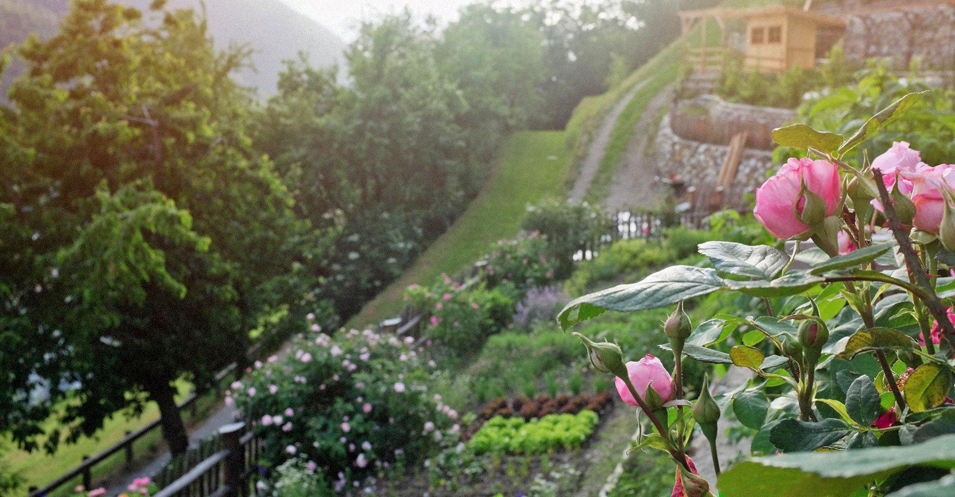 Unsere Bio-Gärten in schönster Südhanglage