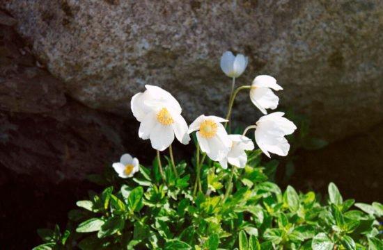 residencetirol-giardini-1