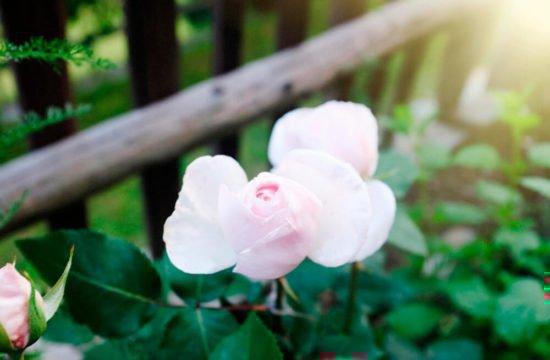 residencetirol-garden-4
